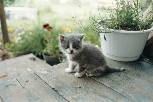 Juergen Teller, Kitten, Canada, (2001)